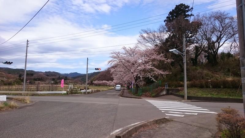 やながわ希望の森公園の入口・桜