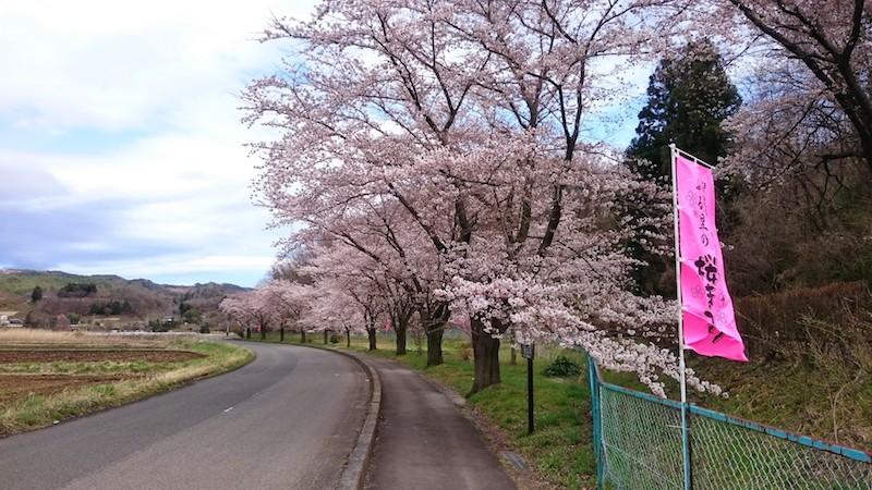 やながわ希望の森公園・桜