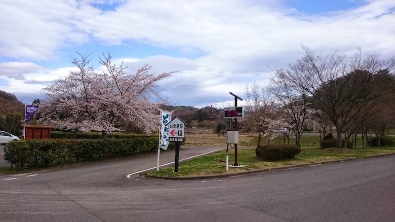 やながわ希望の森公園の桜20150406 2