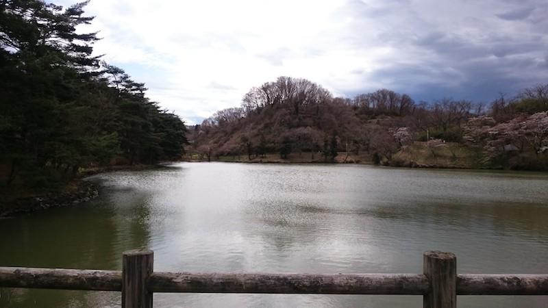 やながわ希望の森公園の桜20150406 7