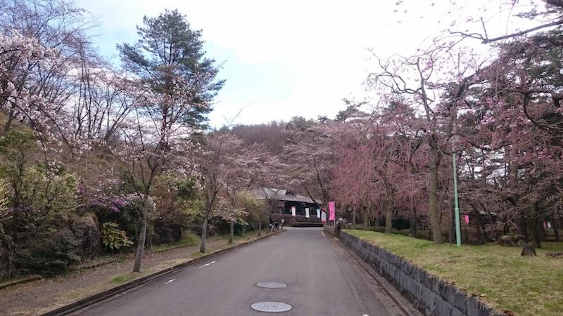 やながわ希望の森公園の桜20150406 9